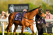 Machine Learner ridden by Megan Nicholls and trained by Joseph Tuite in the Andersons Waste Handicap race.  - Mandatory by-line: Ryan Hiscott/JMP - 01/05/2019 - HORSE RACING - Bath Racecourse - Bath, England - Wednesday 1 May 2019 Race Meeting
