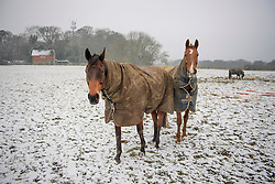 © Licensed to London News Pictures. 12/02/2017. Princess Risborough, UK. Horses stand in a snow covered field in Princess Risborough, Buckinghamshire, south east England, as large parts of the UK wake to freezing temperatures and snowfall over night. Photo credit: Ben Cawthra/LNP