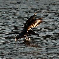 Seagulls in flight at Bristol docks