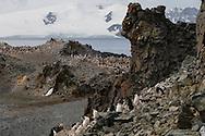 Antarctica. Chinstrap penguin  Half moon island - shetlands archipelago, Antarctica  Pygoscelis antarcticus  Forster / manchots a jugulaire  Half moon island - Shetlands archipel, Antarctica   TAR008