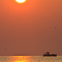 Crab boat being followed by gulls during an August sunrise, Port Mahon, DE