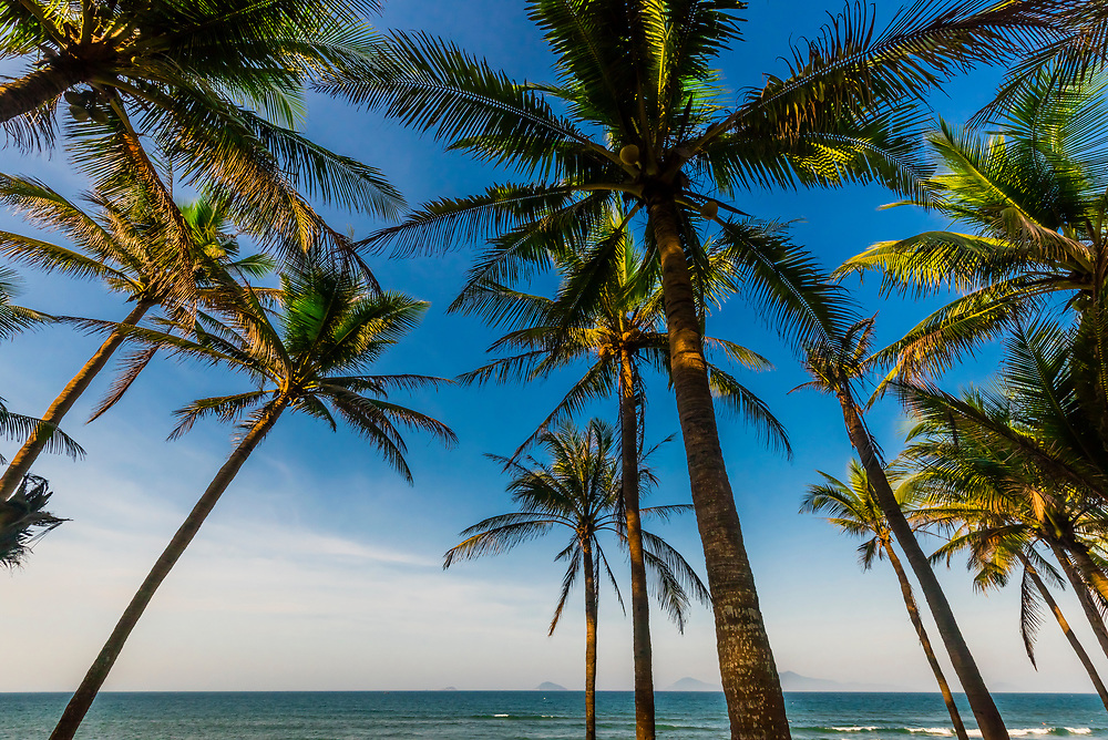 Palm trees line the beach at Hoi An Beach Resort, near Hoi An, Vietnam.