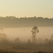 Phu Khieo Wildlife Sanctuary at dawn. Thailand.