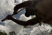 Comunidade de Santa Helena, na região do baixo Jequitinhonha, Norte de Minas Gerais. Nessa região é possível encontrar três tipos de biomas: caatinga, cerrado e mata atlântica. A ASA Brasil, Articulação no Semiárido Brasileiro, tem implementado em diversas comunidades no Norte de Minas o Programa Uma Terra e Duas Águas (P1+2) e o Programa Um Milhão de Cisternas (P1MC) que tem como objetivo viabilizar a captação e armazenamento de água de chuva nessas comunidades para consumo humano, criação de animais e produção de alimentos. Mutirão para construção de viveiro de mudas na comunidade. Mutirão para construção de viveiro de mudas na comunidade.