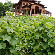 Vineyard at Havlickovy Sady in Prague
