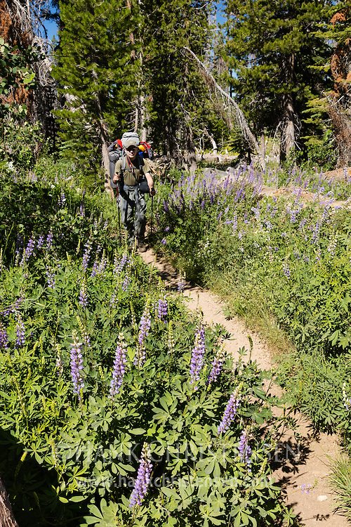 A backpacker hikes along the trail from Crabtree Camp trailhead to Gem Lake, Emigrant Wilderness, CA.