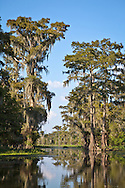 Flat Lake, part of the Atchafalaya Basin is part of Louisiana's wetlands. Southeastern Louisiana's wetlands were threatened by the BP oil spill but containment of the Macondo well saved most of the bayous lakes and waterways that make their way to the Gulf of Mexico. Louisiana's wetlands are threaten by coastal erosion, climate change and the oil and gas industry.