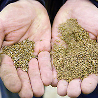 Tod demonstrates what the flax seed looks like  before and after it is milled by his heavy-duty 19th century grinder. From hard seed to a fine, fluffy powderthat can be easily digested by the pigs.