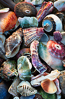 I took this photo of the vivid colors of San Diego seashells to show the details and  variation in the La Jolla tide pools.