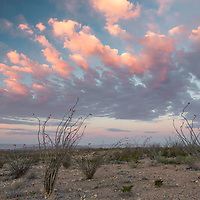 Colorful clouds at sunrise hang high above blooming ocotillo. Maverick Junction, Big Bend National Park, Texas