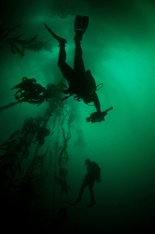Divers make a safety stop at the Point Lobos Marine Rreserve in Carmel, California.