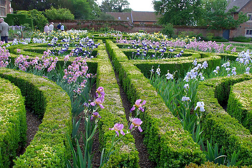 The Iris Garden At Doddington Hall, Lincolnshire, During U0027Iris Weeku0027. The