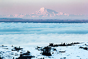 Mt Redoubt with cook inlet and even a moose in the foreground.