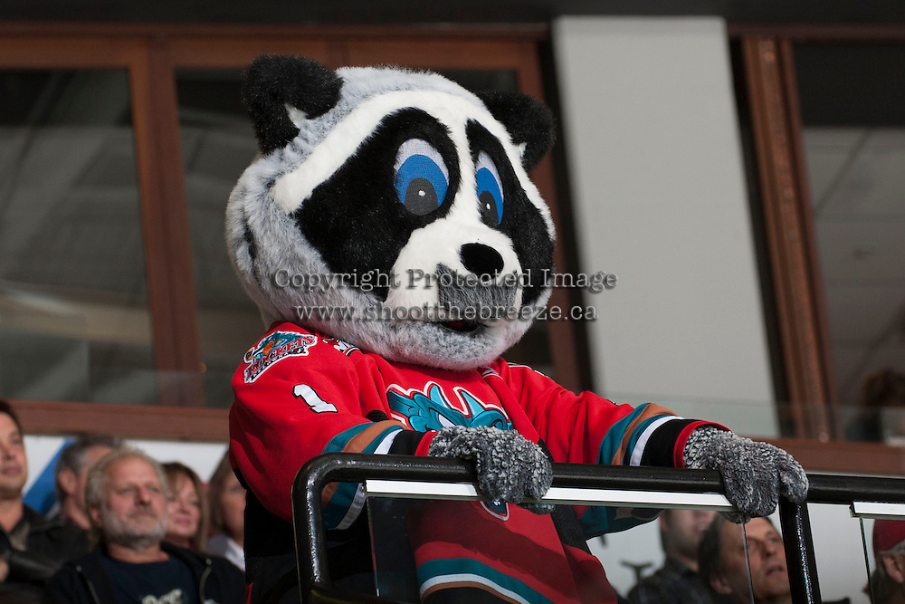 KELOWNA, CANADA - NOVEMBER 3: Rocky Racoon, mascot of the Kelowna Rockets, sports a mustache in support of cancer awareness project Movember as the Prince George Cougars visit the Kelowna Rockets on November 3, 2012 at Prospera Place in Kelowna, British Columbia, Canada (Photo by Marissa Baecker/Shoot the Breeze) *** Local Caption ***