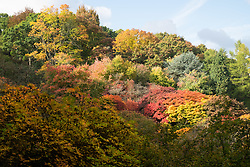 © Licensed to London News Pictures. 22/10/2016. Godalming, UK. Vibrant autumn displays of colour at Winkworth Arboretum in Surrey today.  Photo credit: Rob Arnold/LNP