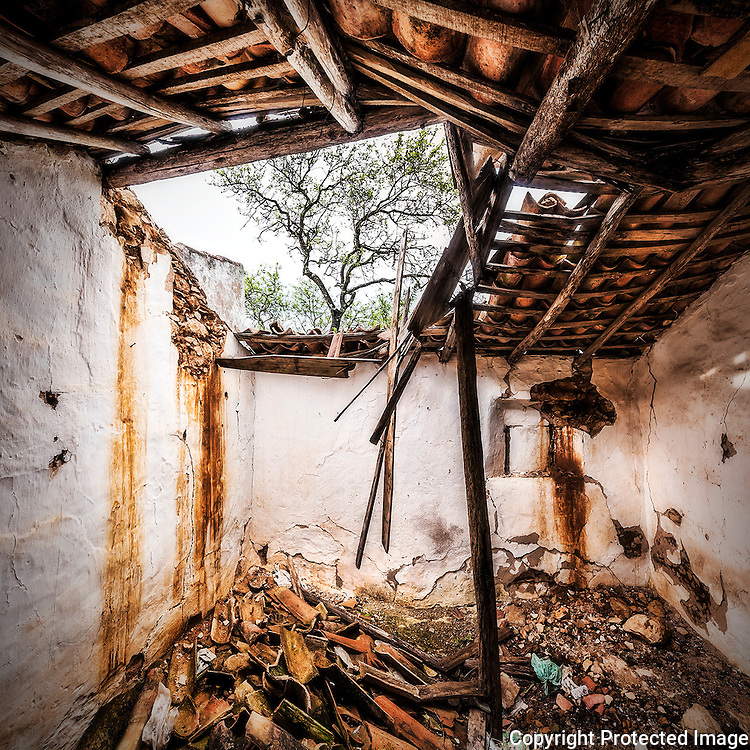 Collapsed roof of a abandoned tinny farmers house with a almond tree outside.