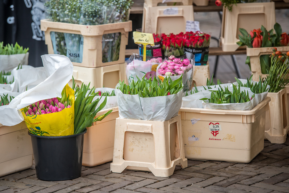 Colorful closed tulips (Tulipa) in bouquets and bulbs in Amsterdam, Netherlands
