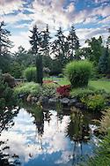 Pond Reflections in Sunken Garden at Queen Elizabeth Park, Vancouver, B.C.