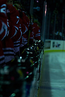 KELOWNA, CANADA - MARCH 3:  The Portland Winterhawks' stand on the bench during the national anthem against the Kelowna Rockets on March 3, 2019 at Prospera Place in Kelowna, British Columbia, Canada.  (Photo by Marissa Baecker/Shoot the Breeze)