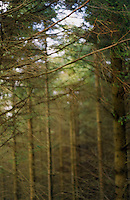 forest in Wicklow Ireland