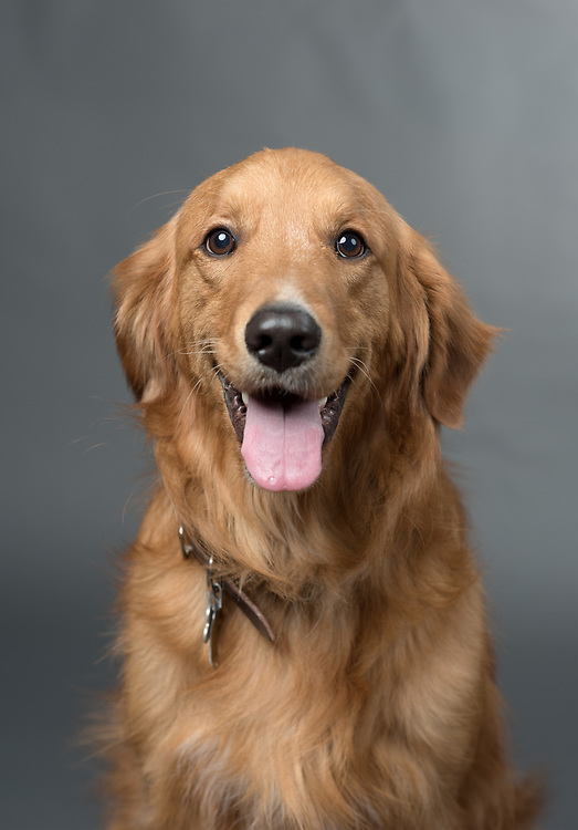 Doug, Therapy Dog, Couseling and Pschological Services, Student Affairs