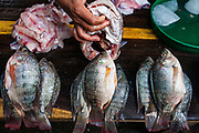 08 JANUARY 2007 - MANAGUA, NICARAGUA:  Fish for sale in Mercado Oriental, the main market that serves Managua, Nicaragua. The market encompasses dozens of square blocks and is the largest market in Central America.  Photo by Jack Kurtz