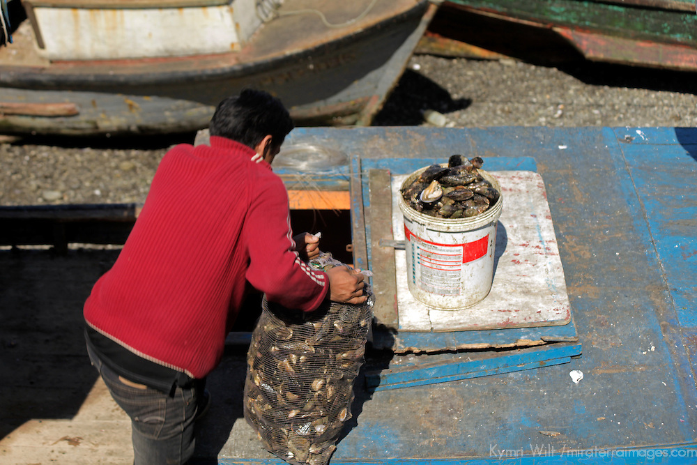 South America, Chile, Puerto Montt. A fisherman loads up fresh mussels for market.