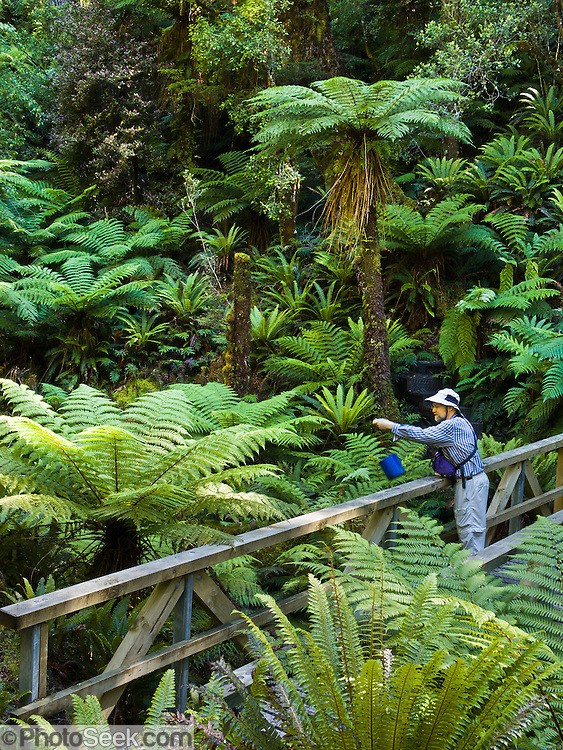 Tom uses a bucket on a string to retrieve drinking water from a stream beneath a wood bridge on Tuatapere Hump Ridge Track, in Fiordland National Park, South Island, New Zealand. In 1990, UNESCO honored Te Wahipounamu - South West New Zealand as a World Heritage Area.