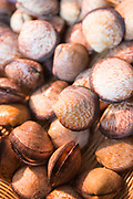 Raw cockles - coques - marine bivalve molluscs on sale at street market Bordeaux, France