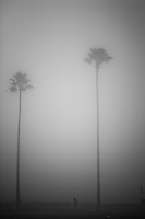 The beach at Newport Beach, California is shrouded in fog making spooky shapes of palm trees, birds and people.
