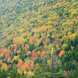 A forest of hardwoods and softwoods as seen from the Appalachian Trail in Maine's Grafton Notch State Park.