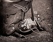 The boot and spur of a working ranch cowboy in southern Colorado. The cowboy is wearing bat wing chaps and branding a calf.