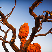 A fallen pinyon pine trunk highlights sandstone formations near balanced rock in Arches National Park near Moab, Utah.