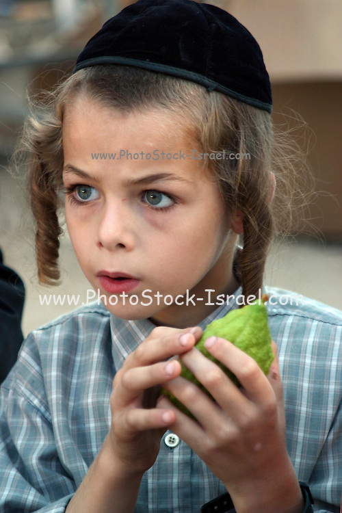 Closely Examining The Etrog The Sukkoth 4 Species Market
