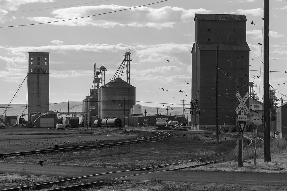 https://Duncan.co/train-tracks-and-grain-elevators