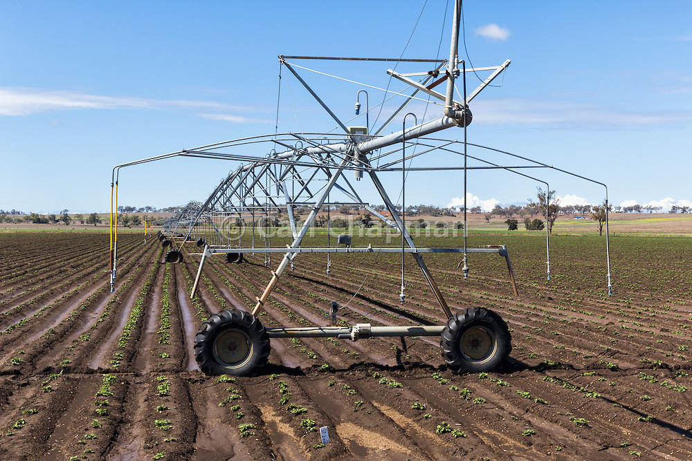 Mobile lateral move irrigation boom system in field of new vegetable crop near Warwick, Queensland, Australia.