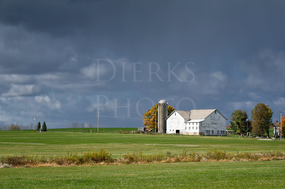 Rain clouds coming from behind to deliver a cloudburst onto a wide open dairy farm still lying in full sunlight before the storm.