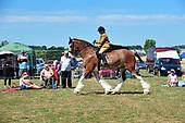 Class 18 - British Ridden Heavy Horse