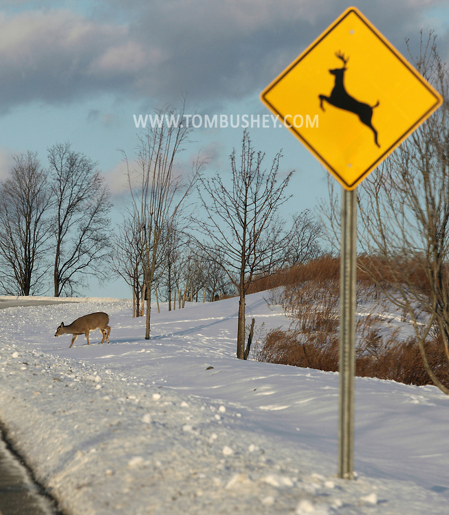 Goshen, New York - A white-tailed deer gets ready to cross a road behind a deer-crossing sign on Jan. 23, 2011. ©Tom Bushey / The Image Works