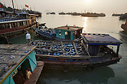Halong Bay. Tourist boats at sunrise.
