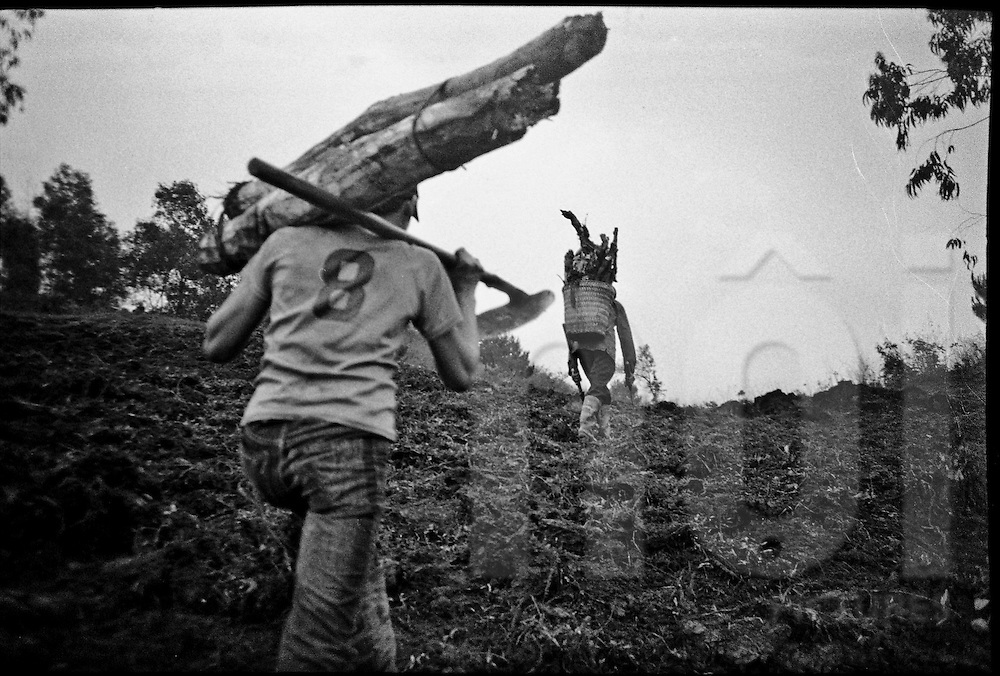 Two young men carry lumber on their back,  Ha Giang Province, Vietnam, Southeast Asia