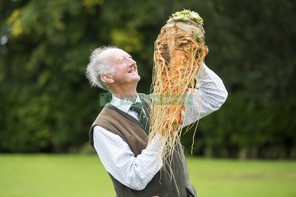 September 16, 2016 - Harrogate, Yorkshire, UK - Harrogate UK. Picture shows Peter Glazebrook & his prize winning carrot that weighed 7.9 kg at the Giant vegetable competition in Harrogate. The competition see's competitors from across the UK show their biggest Carrot's, Cucumbers, Cabbages, Onion's & Tomatoes competing for the title of heaviest & longest at the Harrogate Autumn Flower Show. (Credit Image: © Andrew Mccaren/London News Pictures via ZUMA Wire)