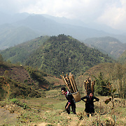 Black Hmong women head back to their village with collected wood carried in baskets on their backs in the Highlands of Sapa, Northern Vietnam. Sapa and the surrounding highlands are close to the Chinese border in Northern Vietnam and is inhabited by highland minorities including Hmong and Dzao groups. Sapa is now a thriving tourist destination for travelers taking the night train from Hanoi. Sapa, Vietnam. 16th March 2012. Photo Tim Clayton
