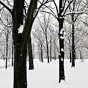 Bare trees in Constitution Gardens on Washington DC's National Mall are covered in snow after a large snow storm hit the area.