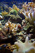 Salt Water Aquarium, Kula Eco Park; Vitu Levu; Fiji