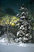 Moonlight Cedar/Snow<br /> &copy;2001 Jeff Becker <br /> All Rights Reserved<br /> 5 Cedar Hill Road<br /> Easton, CT 06612<br /> 203.261.9765<br /> 203.526.4059