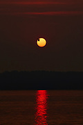 A gull appears in silhouette as it flies across the face of the sun, reddened by the smoke from extensive wildfires, in this view from Edmonds, Washington.