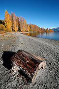 driftwood lies washed up in the foreground beside stunning lake wanaka with its golden trees, blue sky and mountain backdrop, wanaka, new zealand