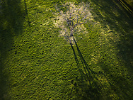A top down aerial view of a tree with white blossoms against lush textured green grass with a long shadow from the low sun, shot in Ritter Park at Huntington, West Virginia.