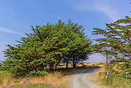 Cypress Grove Preserve, Audubon Canyon Ranch, Tomales Bay, CA